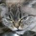 Аватар пользователя ДоброКот